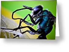 Blue Wasp On Fruit Greeting Card by Ryan Kelly