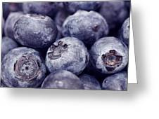 Blueberry Macro Greeting Card by Kitty Ellis