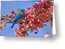 Bluebird In Apple Blossoms Greeting Card by Marie Hicks