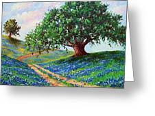 Bluebonnet Road Greeting Card by David G Paul