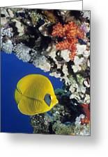 Bluecheek Butterflyfish Greeting Card by Georgette Douwma