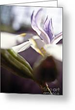 Blurred Iris Greeting Card by Ray Laskowitz - Printscapes