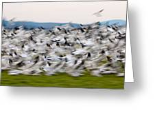 Blurry Birds In A Flurry L467 Greeting Card by Yoshiki Nakamura