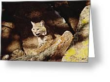 Bobcat Lynx Rufus Portrait On Rock Greeting Card by Gerry Ellis