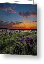 Bonnie's Meadow Greeting Card by Phil Koch