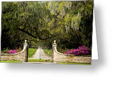 Boone Hall Plantation Greeting Card by Eggers   Photography