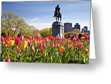 Boston Public Garden Tulips Greeting Card by Susan Cole Kelly