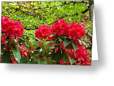 Botanical Garden Art Prints Red Rhodies Trees Baslee Troutman Greeting Card by Baslee Troutman