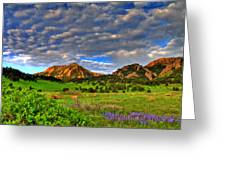 Boulder Spring Wildflowers Greeting Card by Scott Mahon
