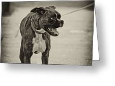 Boxer Greeting Card by Off The Beaten Path Photography - Andrew Alexander