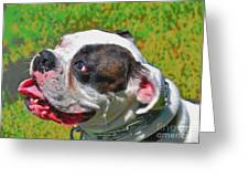 Boxer Portrait Greeting Card by E Robert Dee