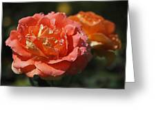 Brass Band Roses Greeting Card by Rona Black