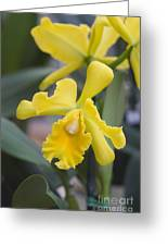 Bright Yellow Cattleya Orchid Greeting Card by Allan Seiden - Printscapes