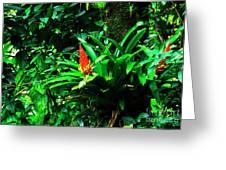Bromeliads El Yunque  Greeting Card by Thomas R Fletcher