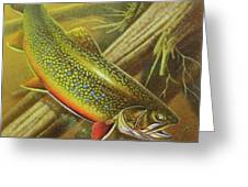 Brook Trout Cover Greeting Card by JQ Licensing