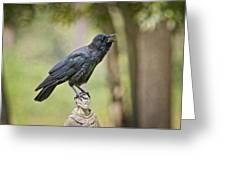 Brother Crow On St. Francis' Head Greeting Card by Bonnie Barry