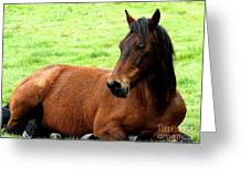 Brown Horse At Rest . R5906 Greeting Card by Wingsdomain Art and Photography