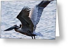 Brown Pelican Away Greeting Card by Robert OP Parrish