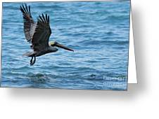 Brown Pelican In Flight Over Water Greeting Card by Sami Sarkis