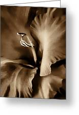 Brown Velvet Gladiolus Flower Greeting Card by Jennie Marie Schell