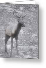 Buck In Fog On Hurricane Ridge - Olympic National Forest - Olympic National Park Wa Greeting Card by Christine Till