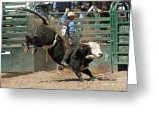 Bucking Bulls 101 Greeting Card by Cheryl Poland