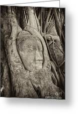 Buddha Head In Tree Greeting Card by Fototrav Print