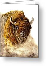 Buffalo Greeting Card by Karen Cortese