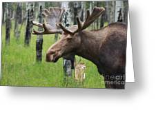 Bull Moose Portrait Greeting Card by Cathy  Beharriell