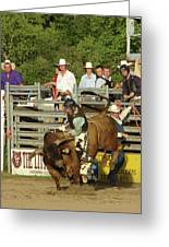 Bull Rider Greeting Card by Phyllis Britton