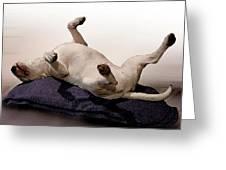 Bull Terrier Dreams Greeting Card by Michael Tompsett
