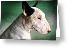Bull Terrier On Green Greeting Card by Michael Tompsett
