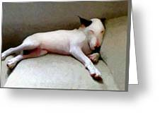 Bull Terrier Sleeping Greeting Card by Michael Tompsett