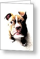 Bulldog Puppy Greeting Card by Michael Tompsett