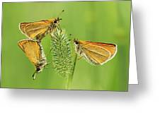 Butterflies Greeting Card by Mircea Costina Photography