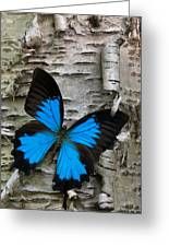 Butterfly Greeting Card by Andreas Freund