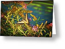 Butterfly Bandit Greeting Card by Nick Roberts