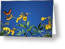 Butterfly In The Sonoran Desert Musuem Greeting Card by Donna Greene