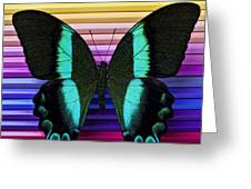 Butterfly on colored pencils Greeting Card by Garry Gay