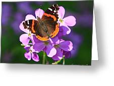Butterfly Greeting Card by Robert Pearson