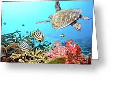 Butterflyfishes And Turtle Greeting Card by MotHaiBaPhoto Prints