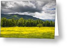Cades Cove Great Smoky Mountains National Park TN - Fields of Gold Greeting Card by Dave Allen
