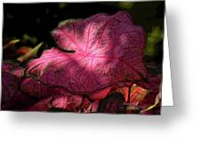 Caladium Mystery Greeting Card by Suzanne Gaff