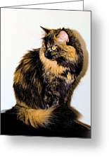 Calico Cats Greeting Card by Cheryl Poland