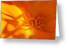 California Poppy Greeting Card by Liz Vernand