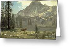 Call Of The Wild Greeting Card by Albert Bierstadt