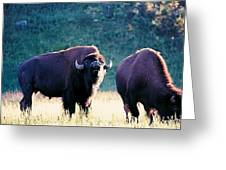 Call Of The Wild Greeting Card by Jan Amiss Photography