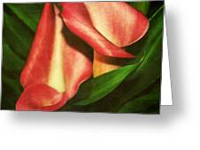 Calla Lillys Greeting Card by Cathie Tyler