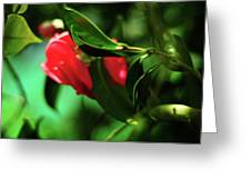 Camellia Dream Greeting Card by Rebecca Sherman