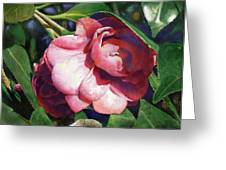 Camellianne Greeting Card by Andrew King